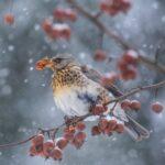 Konkurs fotograficzny Hu hu ha Nasza zima rozstrzygnięty