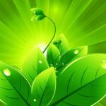 Rośliny zielarskie, kosmetyki naturalne i żywność funkcjonalna